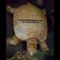 Con Rùa Gỗ